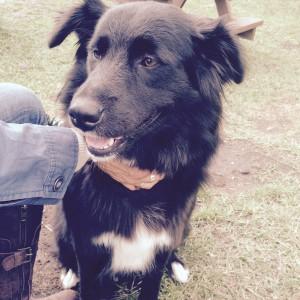 Lost Dog Victoria BC